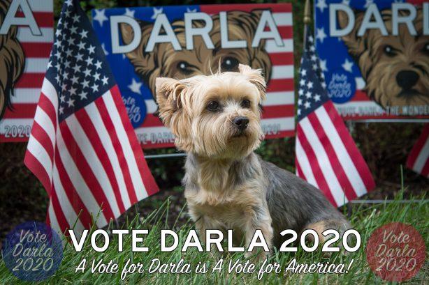 darla-august-campaign-WEB