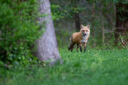 041121-06-FOX-4x6-web