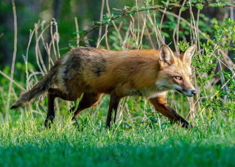 041321-09-FOX-WEB