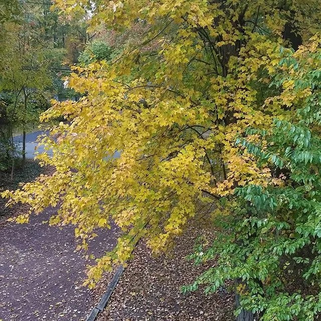 #autumnleaves #leaves View from out my window of my world. Enjoy the view and make it a great day, cheers