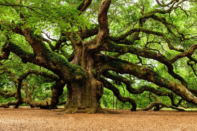 angel-oak-sale-4