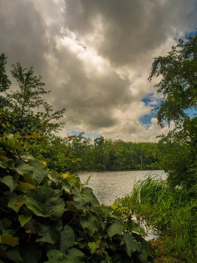 rancocas-state-forest-photos-7240001