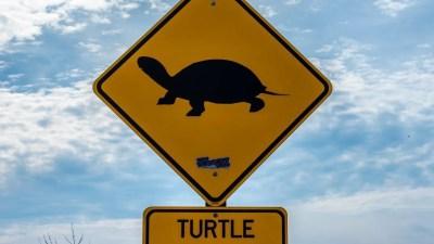turtleh-photo-3300072