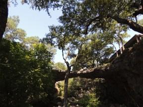 "The ""natural bridge"" of Natural Bridge Caverns"