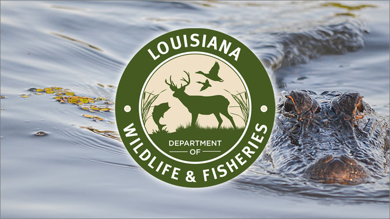 LDWF announces 2021 alligator lottery for WMAs, USACE property and public lakes
