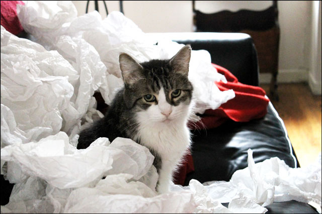 ed-in-tissue-paper-3