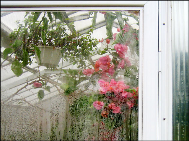 greenhouse-in-the-park