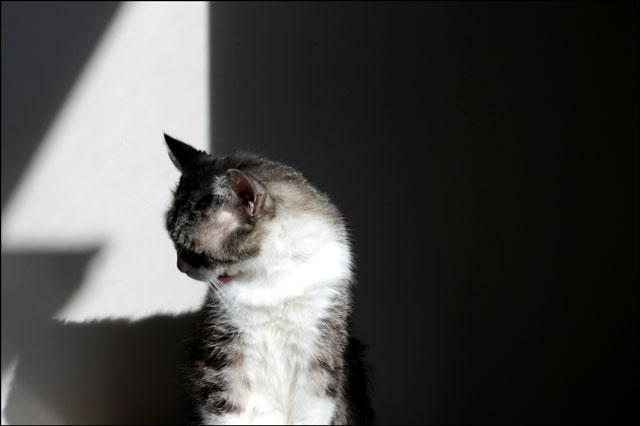 cat-bath-in-a-sunbeam-1