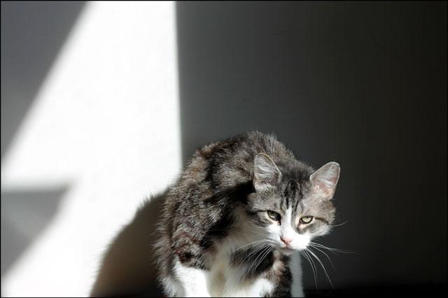 eddie-in-a-sunbeam-1