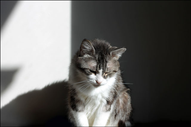 eddie-in-a-sunbeam-3