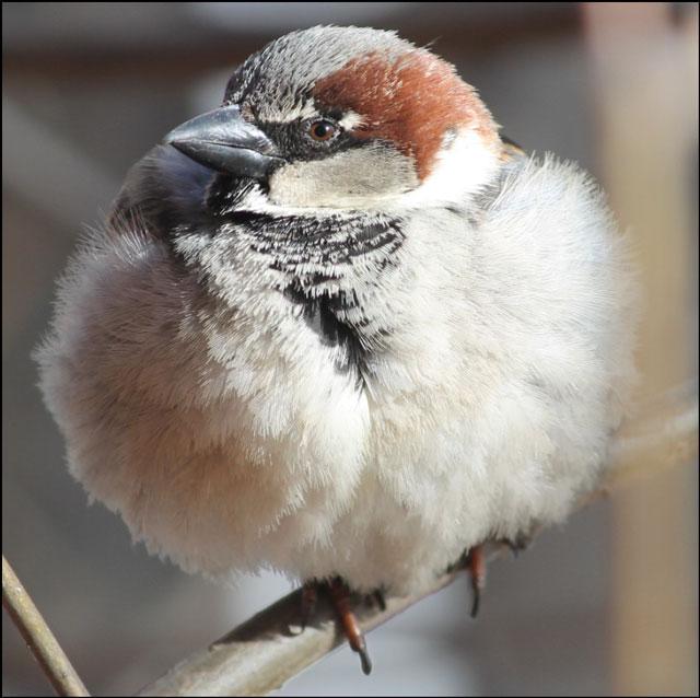 sparrow-09