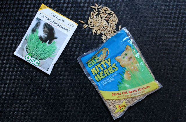 cat-grass-seeds
