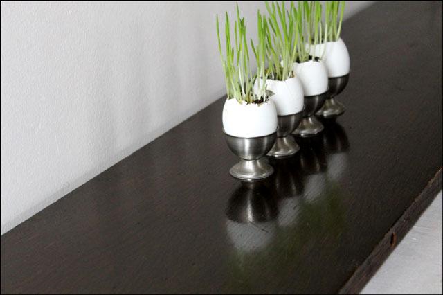 grass grown in eggshells