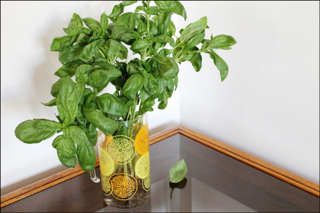 basil-stored-in-water