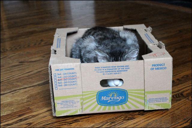 eddie-in-tomato-box-02