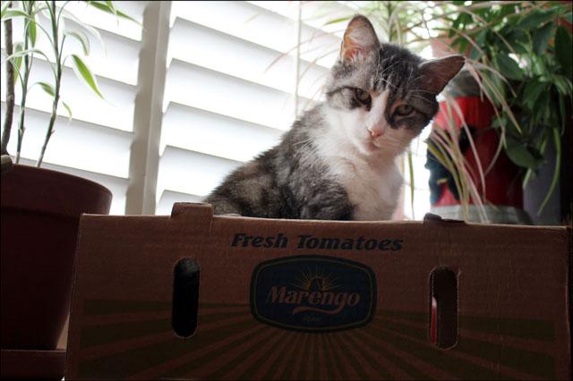 eddie-in-tomato-box-05