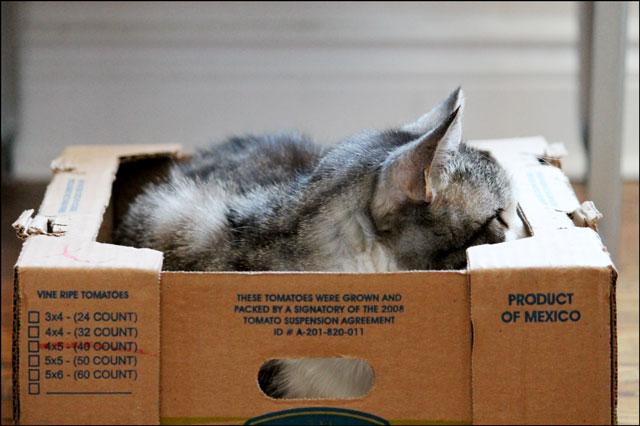 eddie-in-tomato-box-07