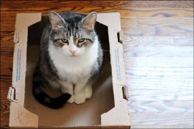 eddie-in-tomato-box-10