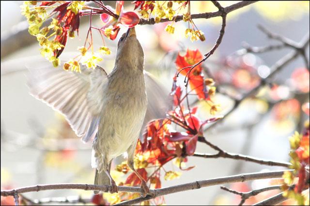 sparrow-feeding-02