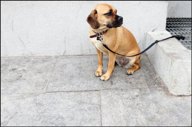 waiting-puppy-04