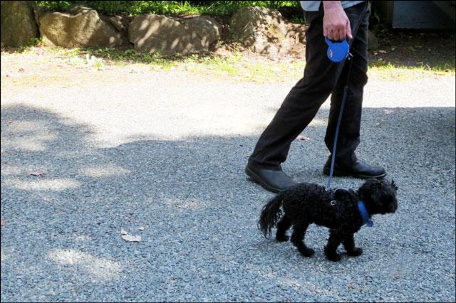walking-little-dog