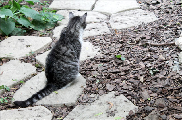 eddie-waiting-on-path