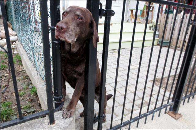 friendly-dog-5