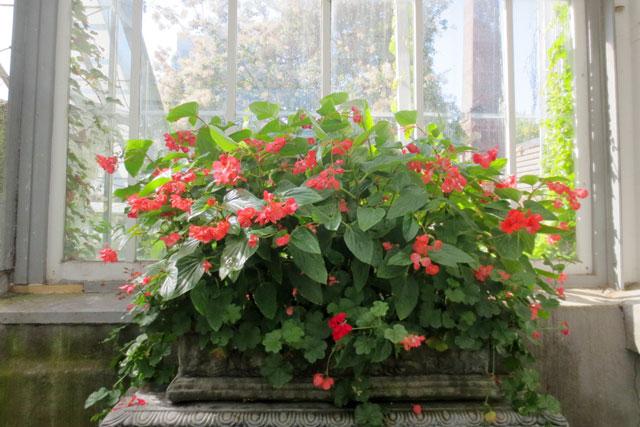 flower-planter-allan-gardens