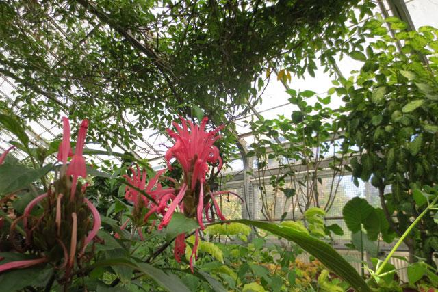 strange-flowers-allan-gardens