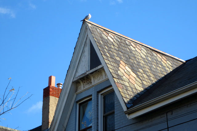 bird-on-a-roof-kensington-market