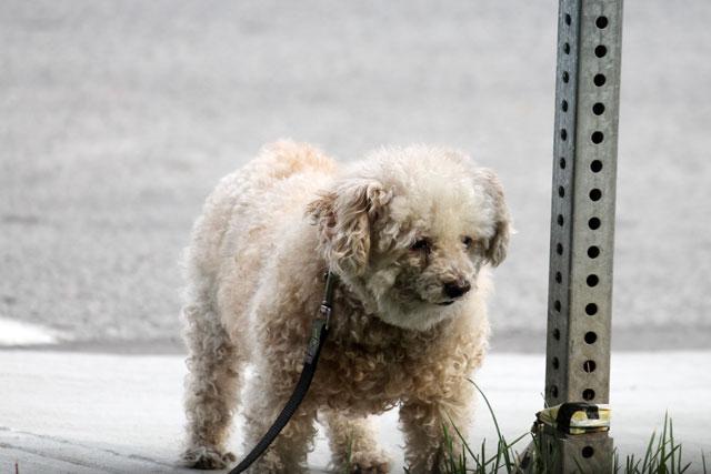 cute-dog-03