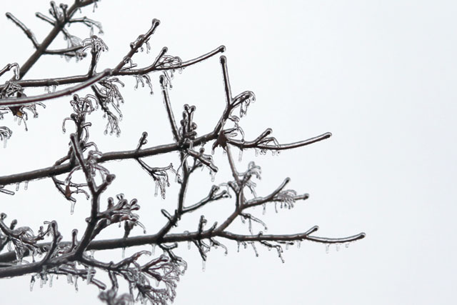 ice-on-branches-ice-storm-02