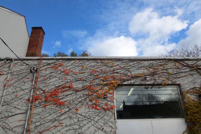 vine-on-building