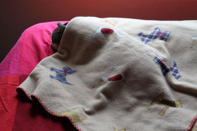 eddie-under-dog-blanket-3