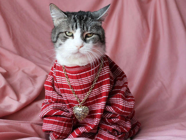 cat-in-shirt-necklace-01