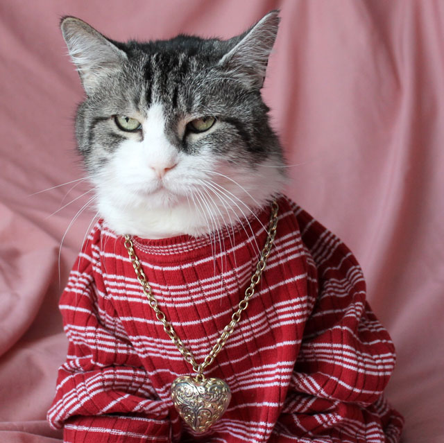 cat wearing sweater and necklace