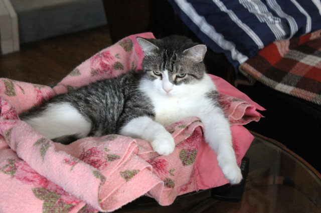 ed-pink-blanket-2