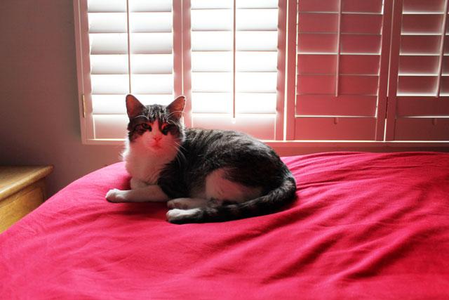 eddie-on-bed