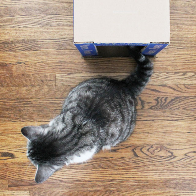 cat-and-his-cardboard-house-2
