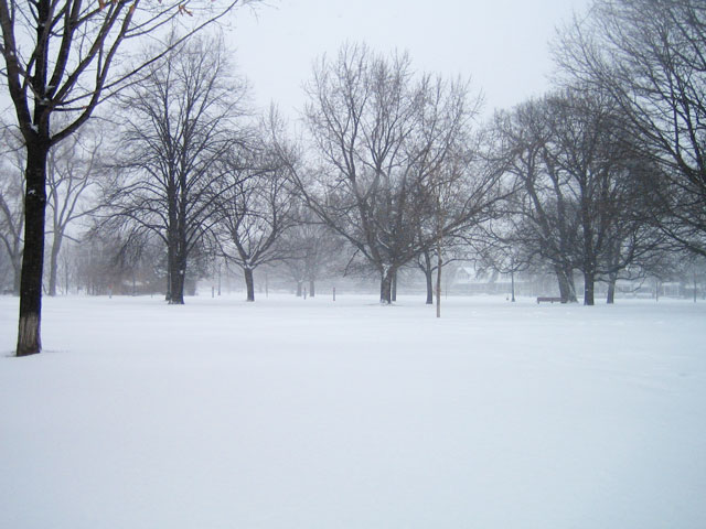 snowstorm-toronto-march-2014-01