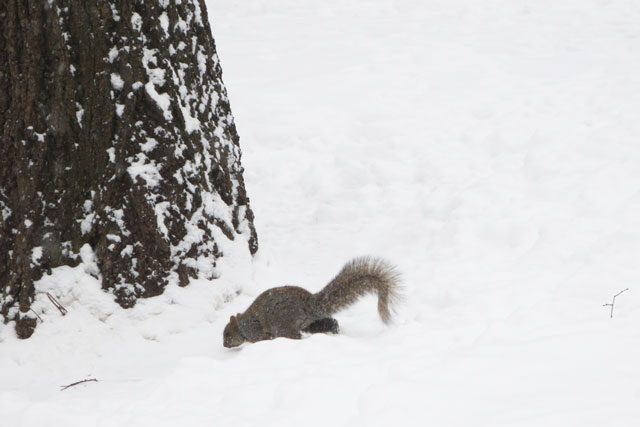 squirrel-in-the-snow-2