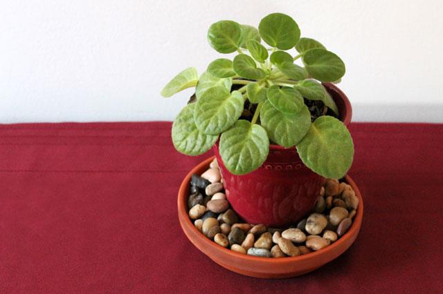 potted-plant-centerpiece