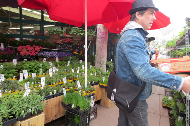 getting-herb-plants-in-kensington-market-03