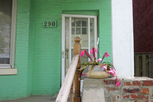 flowering-cactus-as-a-mint-green-house