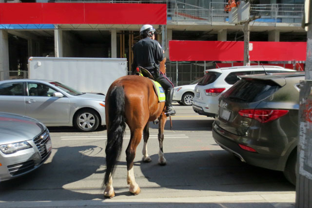 police-horse-in-traffic-toronto