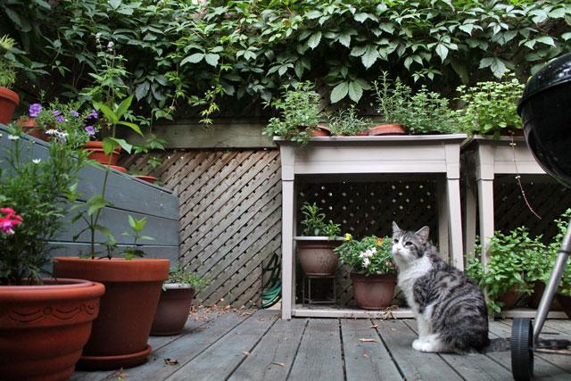 eddie-on-the-deck-02