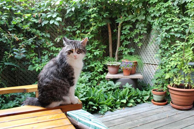eddie-on-the-deck