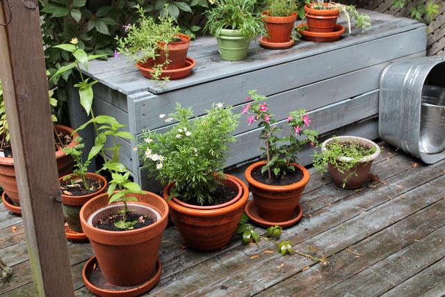 rainy-deck