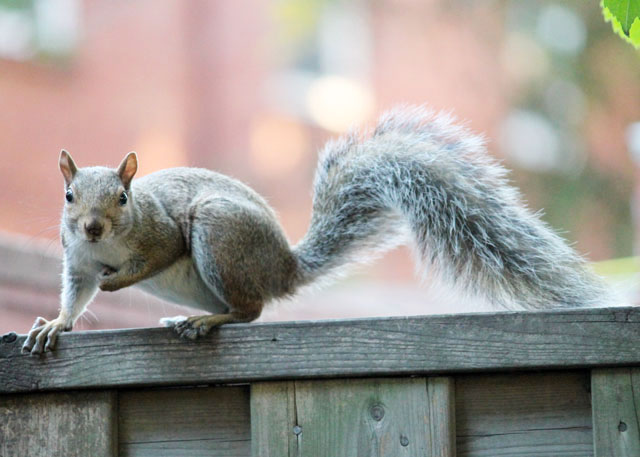 squirrel-friend-02