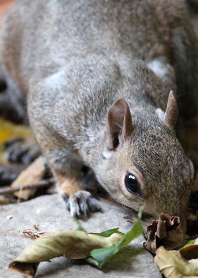 squirrel-friend-08